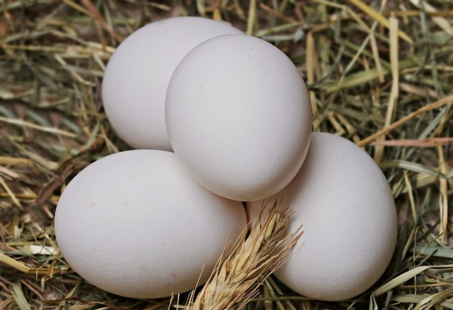 Eggs: Healthy And High In Nutritional Value